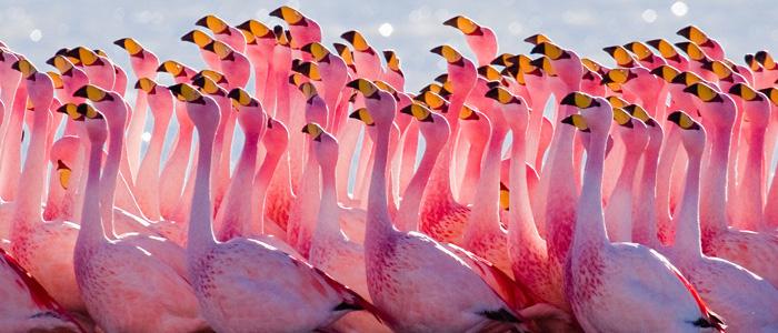 manyas kuşu cenneti ile ilgili görsel sonucu