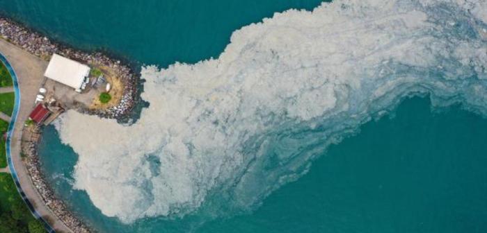 Musilaj, Deniz Salyası Nedir